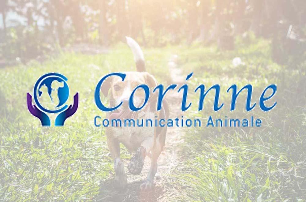 nextnet-agence-communication-freelance-nice-corinne-animal-logo-10-guide